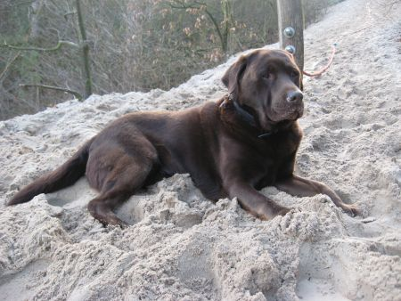 Bijna 10 jaar, lekker in het zand van de duinen in Schoorl