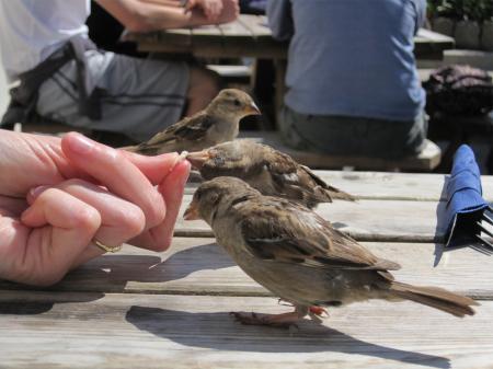 De brutale musjes lunchten ook mee in Tolman's pub
