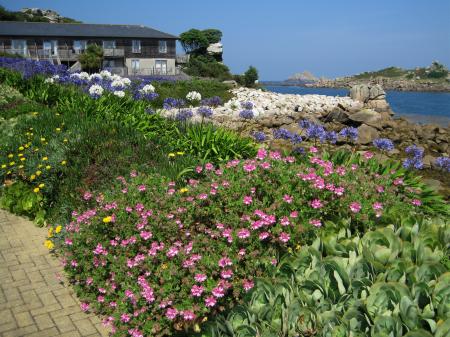 Typische bloemen voor The Scillies